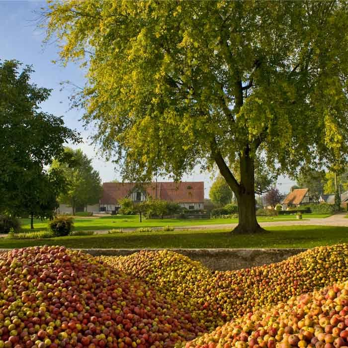 Tas de pommes au Pressoir d'Or à Frenelles-en-Vexin Terroir